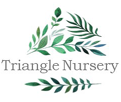 Triangle Nursery -